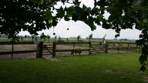 paarden-rijbak-en-wei(klein)